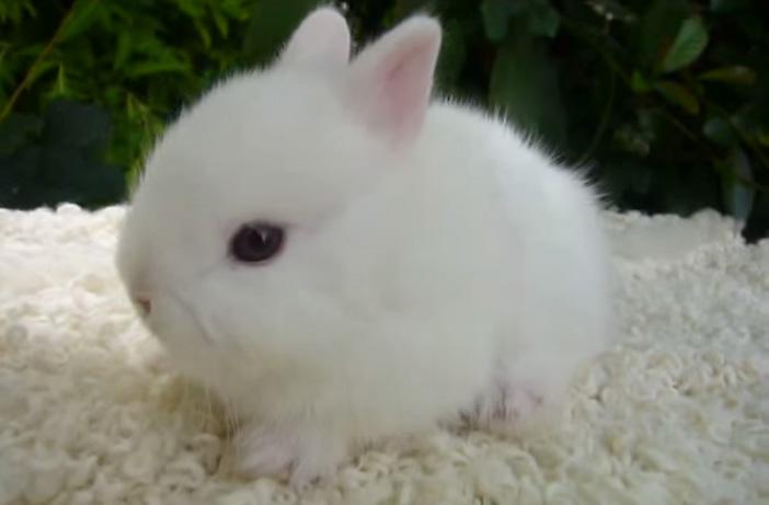 丸いウサギ