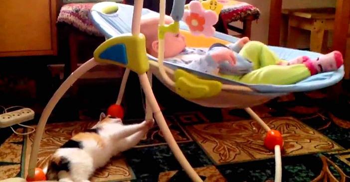ゆりかごを揺らす猫