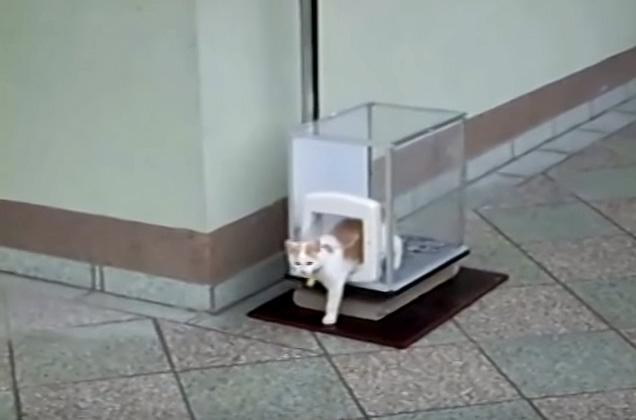 エレベーターから降りる猫