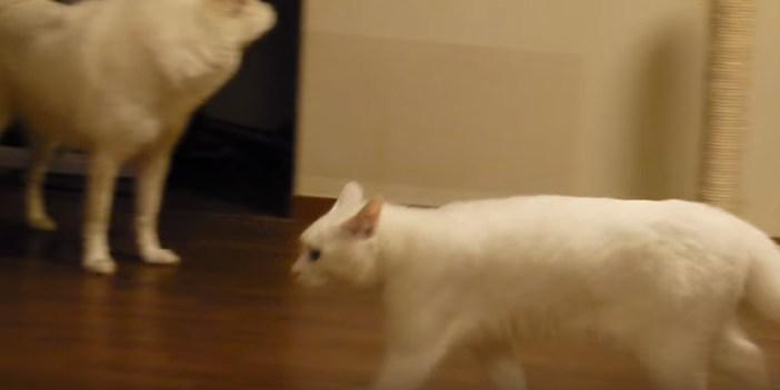 恥ずかしそうに去っていく猫