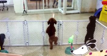踊ってジャンプする犬