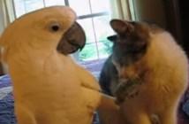 猫をマッサージするオウム