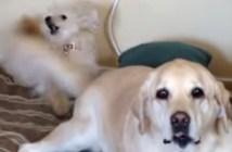 シッポ攻撃を受け続ける犬