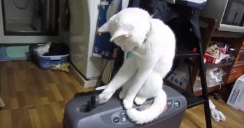 ストーブ猫