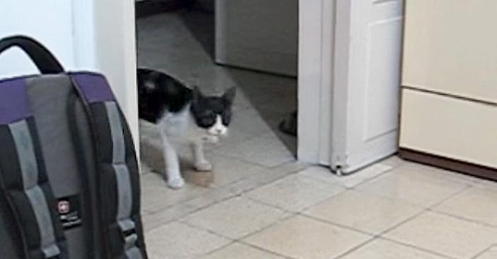 おもちゃを取ってくる猫