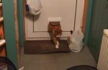 ドアにつっかえる猫