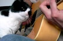 ギターに寄りかかる猫