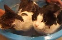 お風呂から出たくない親子猫