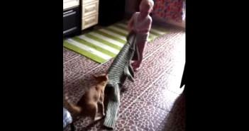 猫と赤ちゃんのセーター争奪戦