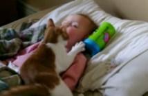 赤ちゃんにスリスリする猫