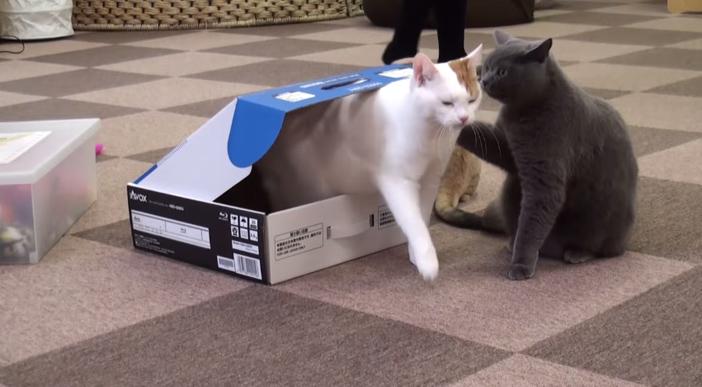 箱から出てきた猫の肩を叩く猫
