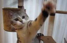 顔の動きが速すぎる猫