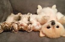 ヘソ天子猫と子犬
