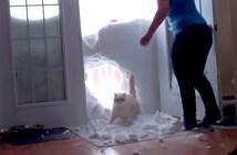 雪の壁を突き破って帰宅する猫
