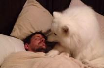 ご主人さまを優しく起こす犬