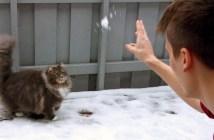 雪遊びが大好きな猫
