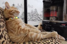ストーブを独り占めする猫