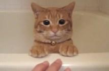 バスタブに隠れる猫