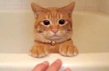湯船にゆっくりと隠れる猫