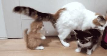 かわいい動物の赤ちゃん