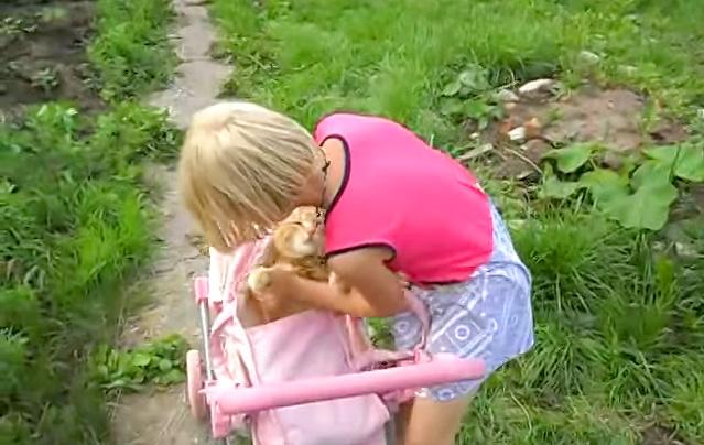 ベビーカーに乗せられる猫