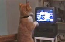 ボクサーになりきる猫