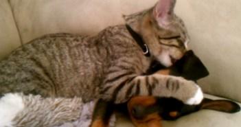 子犬を毛づくろいする猫