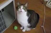ご飯を食べる時に了解を取る猫