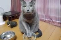 もっとご飯が欲しい猫