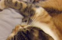 飼い主さんの手を絶対に離さない猫