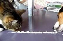 犬と猫の早食い対決