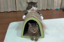 爪研ぎを抱える猫
