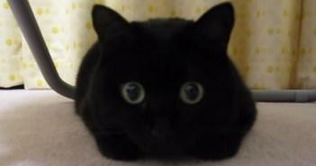 まっくろくろすけのような猫