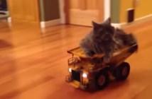 ラジコンカーに乗る猫