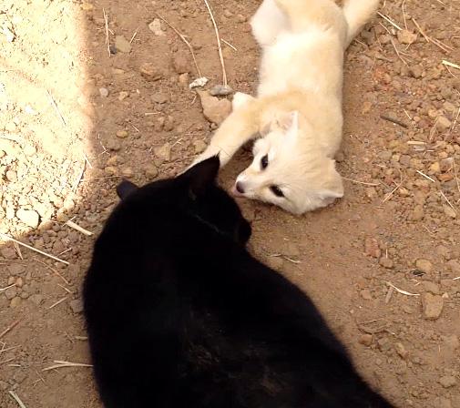 猫と再会したフェネック