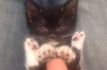 真剣な表情でナデナデされる子猫