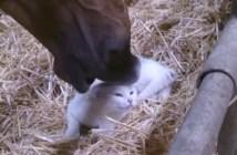 猫を撫でる馬