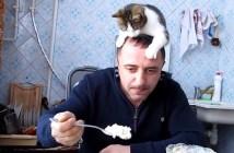 頭の上に乗る猫