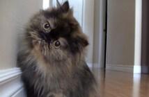 カメラが気になる猫