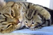 子猫をだっこする母猫