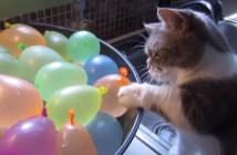 水風船に興味津々の子猫