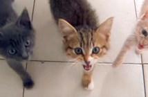 ご飯が食べたい子猫