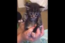 手をグーパーする子猫