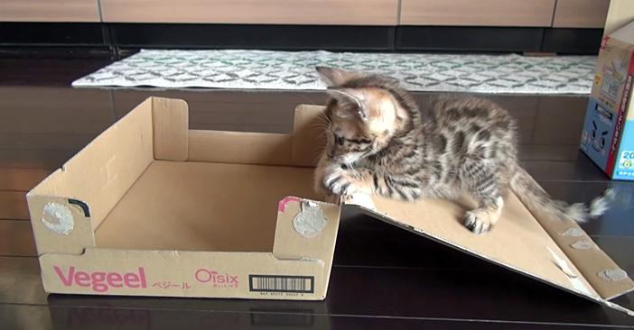 ダンボール子猫
