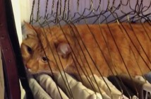 ハンガーでくつろぐ猫
