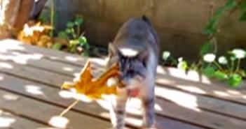 葉っぱを持ってきてくれる猫