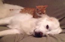 犬をマッサージする子猫