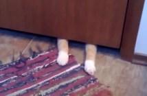 ラグマットが大好きな猫