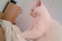 優しく起こしてくれる猫