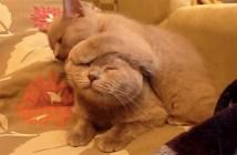 母猫をペロペロする子猫